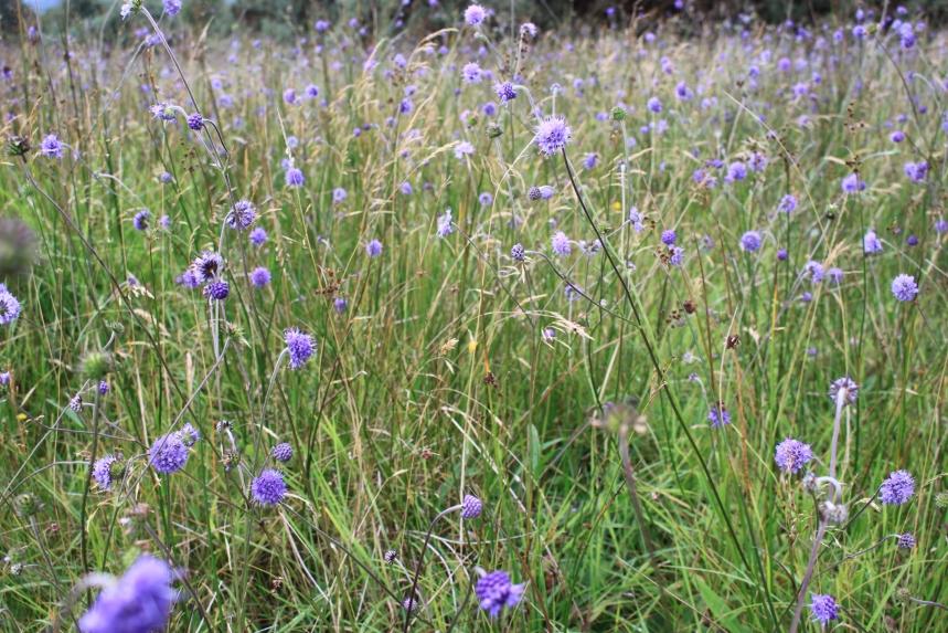 Marsh Fritillary habitat Dooard N Leitrim