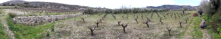 Plot where actions on the maintenance of stone-walls and natural vegetation edges have been taken under the AgroLIFE project